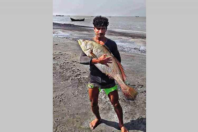 81 fishes fetch Tk 4.0m for Cox's Bazar fisherman