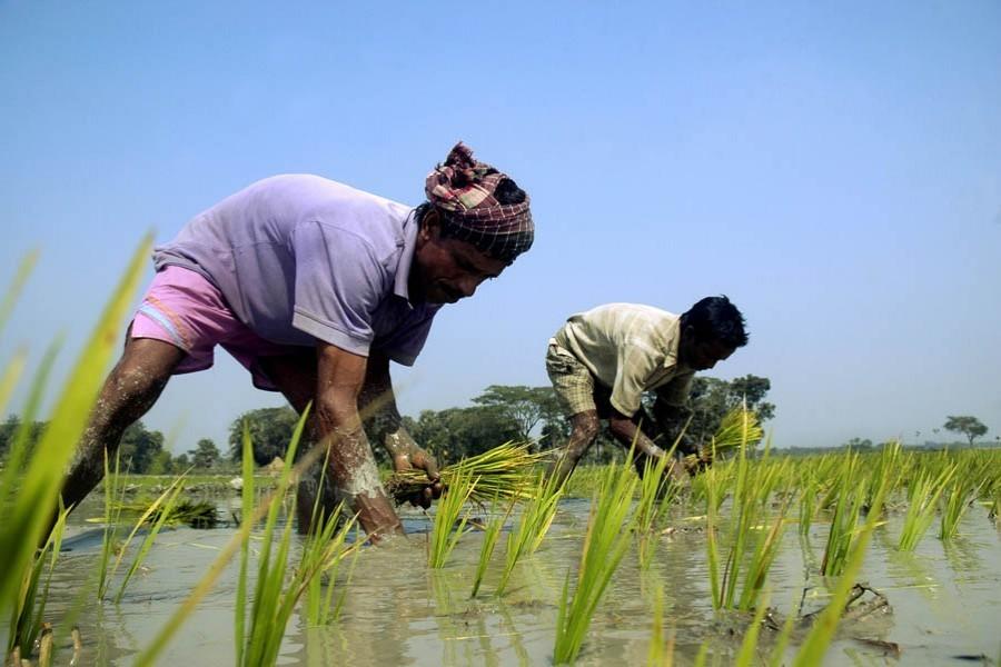 Boro acreage falls to three-year low