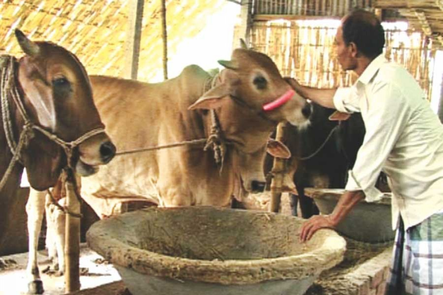 Cattle rearers in dire straits as pandemic hurts demand