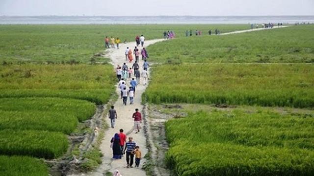 Cereal crops, vegetation turn Padma char a green landscape