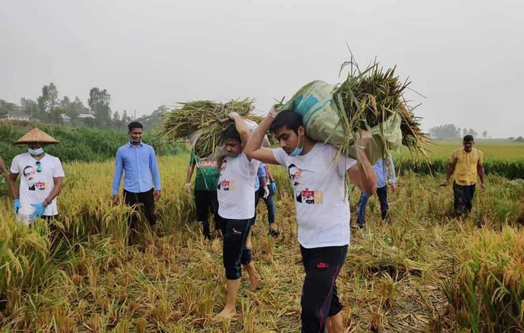 Chhatra League joins farmers harvesting paddy amid labour crisis