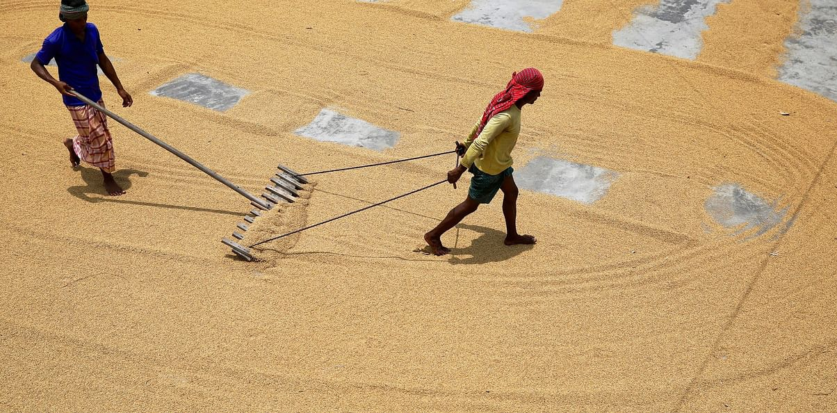 Chaldal sources 115mt rice from rural areas