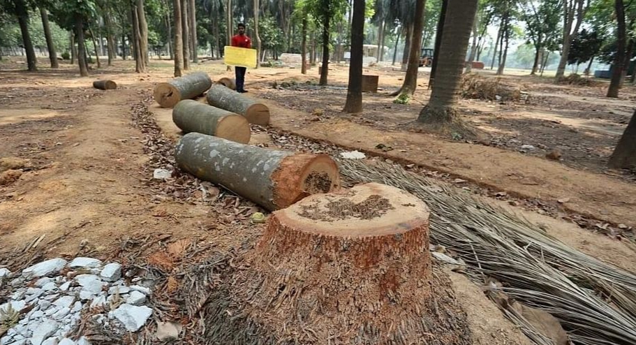 Stop tree cutting at Suhrawardy Udyan till May 20: HC