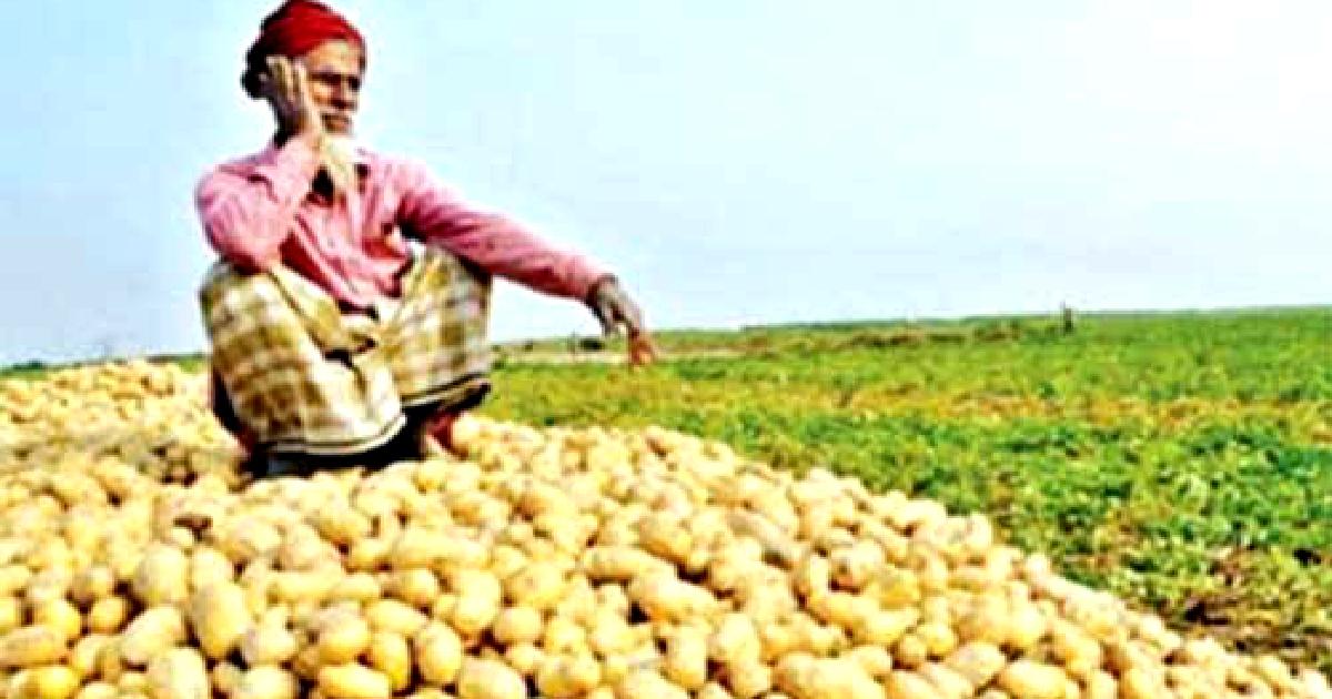 Jashore potato farmers in distress