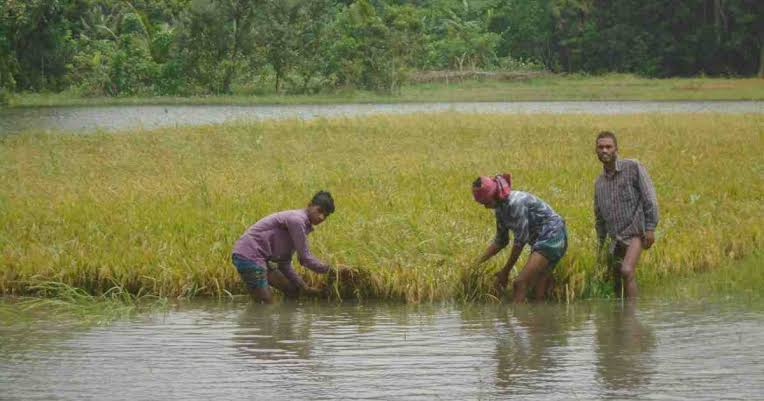 Flood condition posing threat to targeted Aus, Aman production