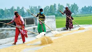 Govt to procure 850,000 MT food grains from marginal farmers