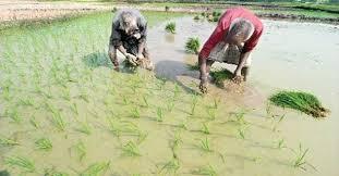 Bangladesh moving towards high-value crops