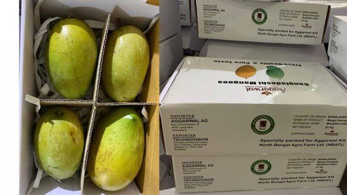 BD starts exporting mangoes to Switzerland