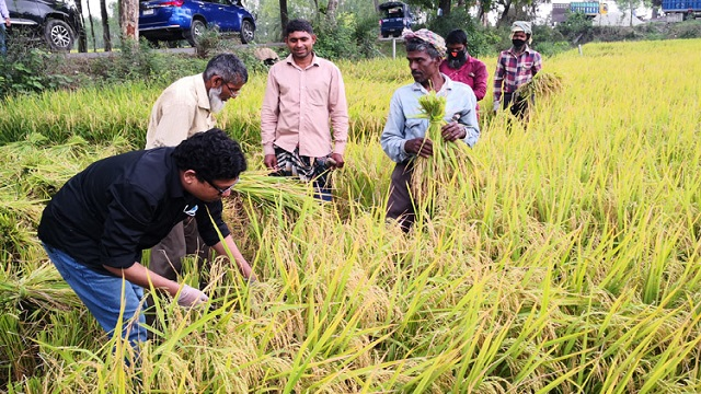 State Minister Palak takes part in harvesting paddy