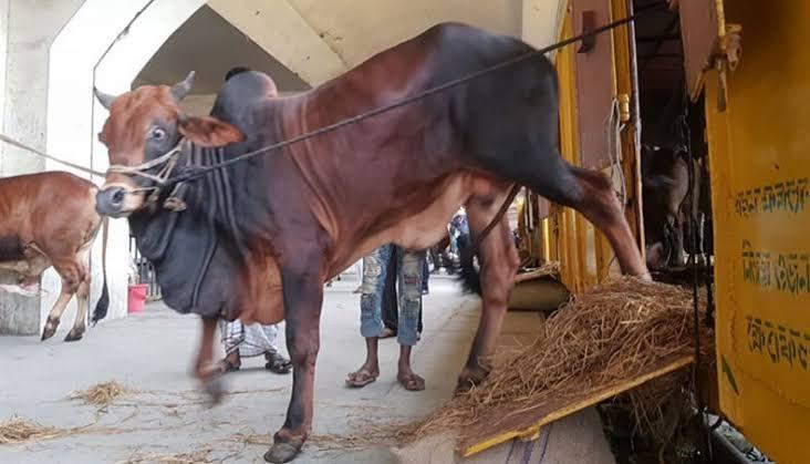 BR starts transporting sacrificial animals