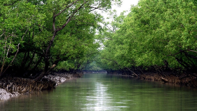 Bangladesh to invite WHC team to visit Sundarbans