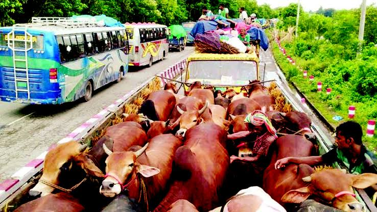 Cattle traders at mercy of extortionists in Ctg
