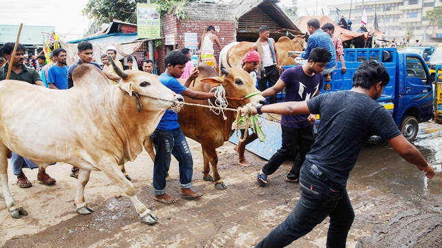 Cattle markets draw crowd