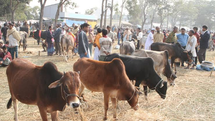 Cattle market has gathered online in Chittagong