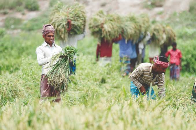 Boro farmers report 40pc deficit between actual and expected profit