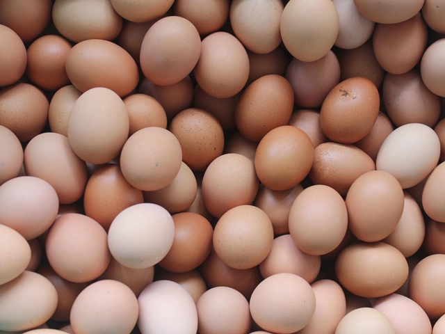 BD to become self-sufficient in egg production in FY20