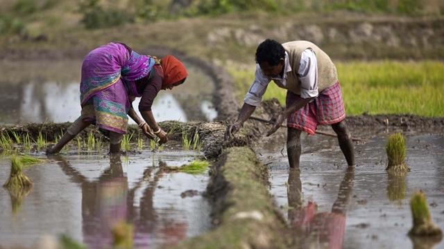 Banks achieve 71pc target in disbursement of farm loan