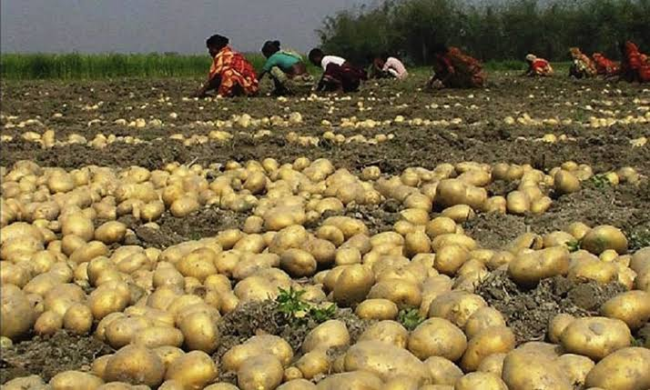 Minister eyes developed seeds to boost potato production, export