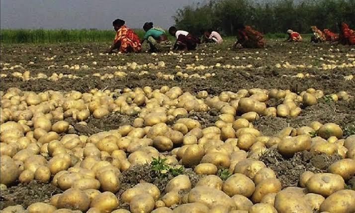 Traders back potato export ban until Dec