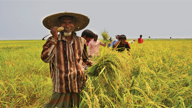 Farmers happy over good prices of newly-harvested Boro