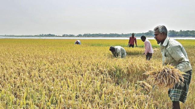 Boro procurement far from target
