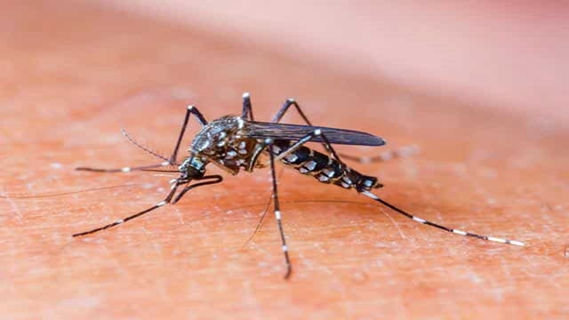 Nothing to be panicked over dengue: experts