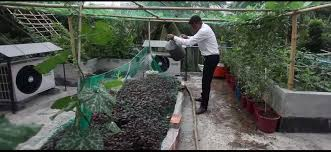 DNCC announces 10pc holding tax rebate for rooftop gardening