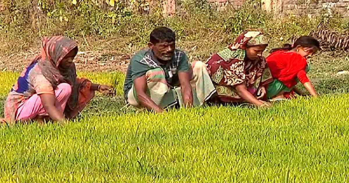 Agriculture in the spotlight in Covid-hit Bangladesh