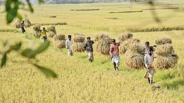 WDB asks Sunamganj farmers for quick harvest of paddy