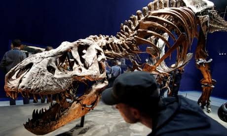 New dinosaur species is largest found in Australia: Scientists