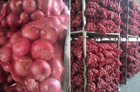 Govt moves to build cold storage for onion