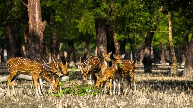 Sunderbans wildlife gets extended sanctuary