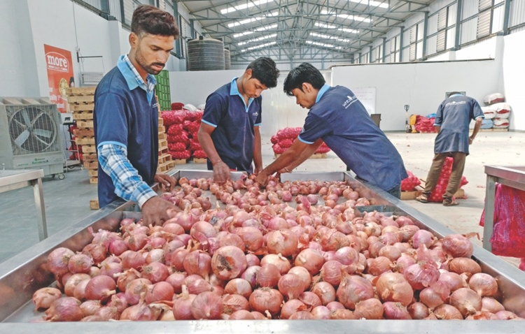 India may extend onion export ban