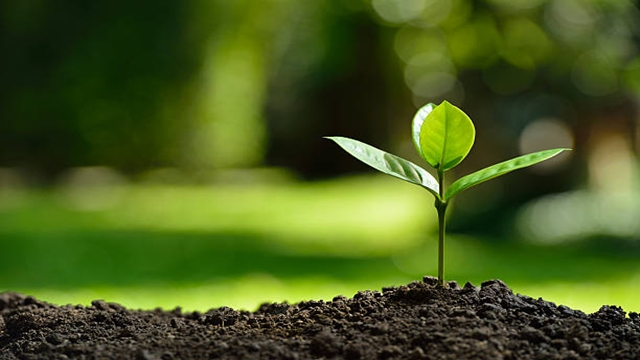 One crore saplings to be planted marking Mujib Year: minister