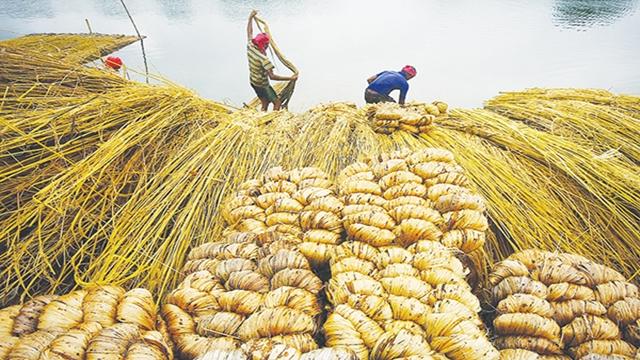 বাংলাদেশের পাটশিল্প : ঘুরে দাঁড়ানোর হাতছানি