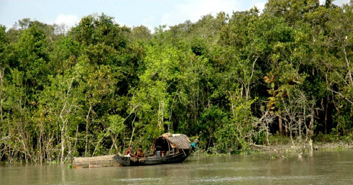 Govt plans to revamp facilities in Sundarbans to boost tourism