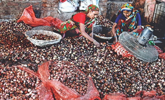 Rotten onions selling for high profits