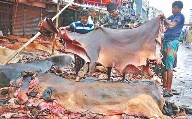 Govt fixes rawhide price for sacrificial animals