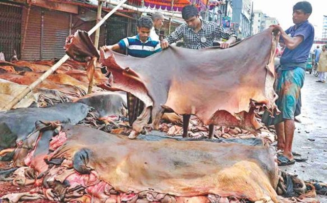 Govt allows rawhide export to keep market stable