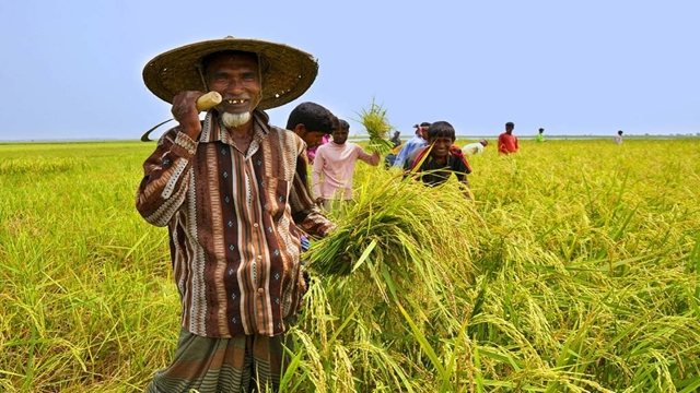 Rice yield hits record high