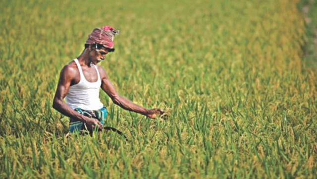 BB sounds tough as July-Aug farm credit drops
