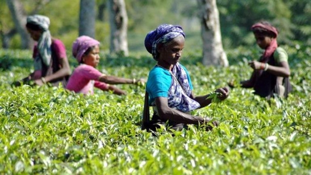 BB underscores branding of local teas