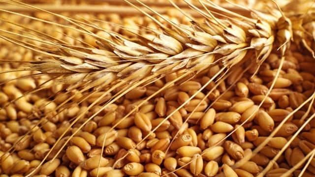 Bangladesh to increase wheat imports 10pc in 2018/19
